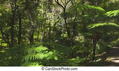 Leaves of tropical tree ferns and other vegetation at ...