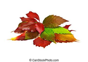 Leaves of vine