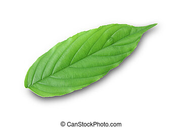 Leaves on a separate white background.