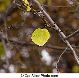 leaves on a tree in autumn