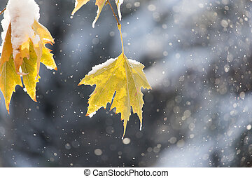 leaves on a tree in winter
