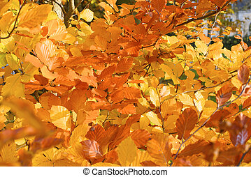 Leaves on a twig in autumn.