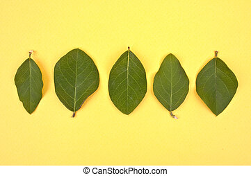 Leaves on a Vibrant Background
