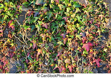 leaves on a wall
