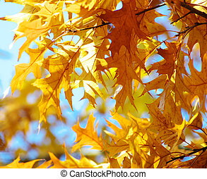 leaves on autumn