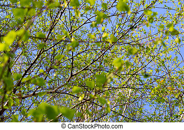 Leaves on branches of a tree