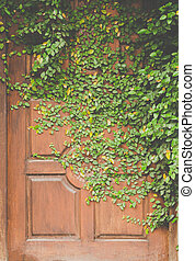 leaves on door wall for wallpaper