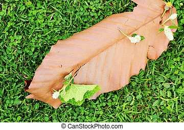 leaves on grass background.