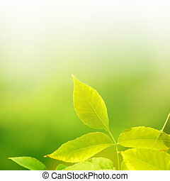leaves on green background
