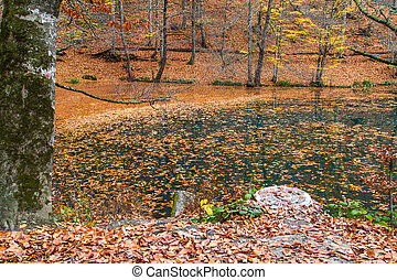 Leaves on Lake in Autumn