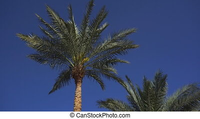 Leaves on palm trees stir from the wind on a sunny summer...