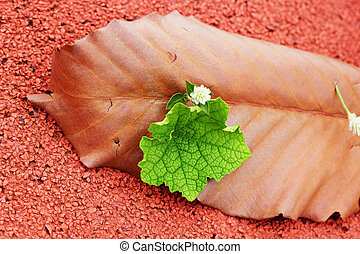 leaves on red background.