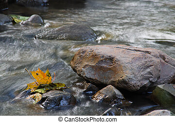 leaves on rocks in water
