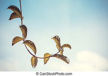Leaves on sky background