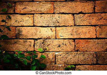 Leaves on the brick wall