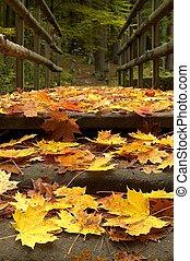 leaves on the bridge