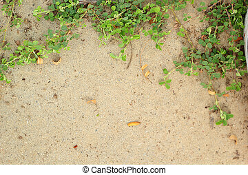 Leaves on the cement floor.