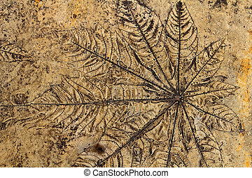 Leaves on the cement floor