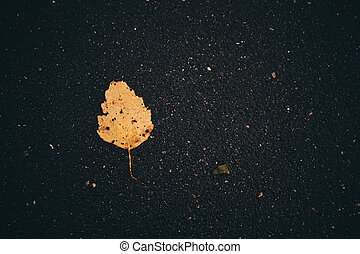 Leaves on the road. Fallen leaves. Leaf fall. Golden autumn.
