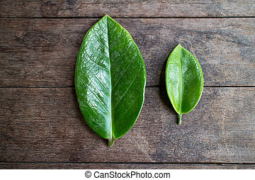 Leaves on the table