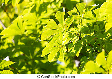 leaves on the tree as a background