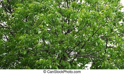 Leaves on the tree swaying in the wind