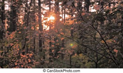 Leaves on the trees drifting and shimmering on the wind....