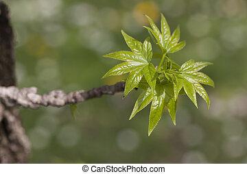 leaves on tree in spring