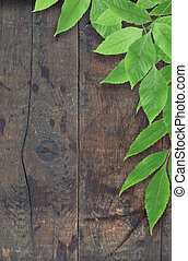 Branch with freshnes green leaves against old wooden surface