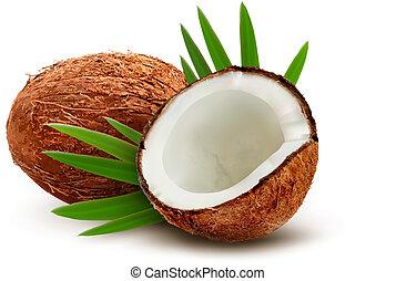 leaves., orzech kokosowy, vector.