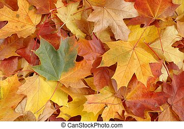 Leaves - Autumn leaves