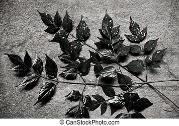 leaves placed on the stone slab