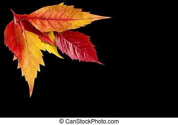 Leaves Set on Black