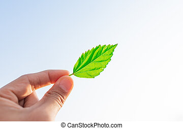 leaves shrug with their hand on the white sky background