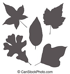 Leaves silhouette illustration