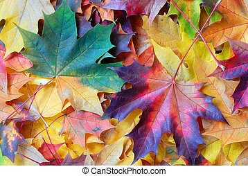 Leaves - Autumn leaves background
