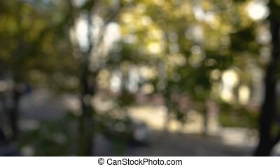 Leaves swaying in the wind with a sunbeam out of focus