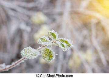 Leaves tree with hoarfrost in forest