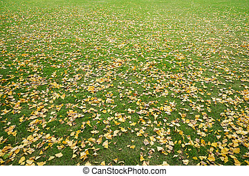 leaves turn to yellow and fall to the grass in park in winter season