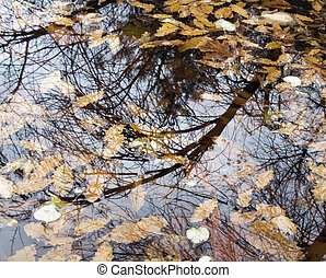 Leaves under the water