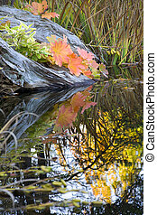 Leaves Water Reflections Fall Colors Van Dusen Gardens