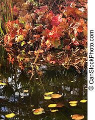 Leaves Water Reflections Fall Colors Van Dusen Gardens