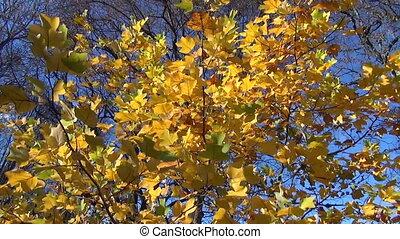 leaves wind sway