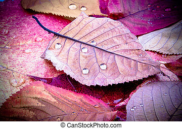 leaves with drops of rain