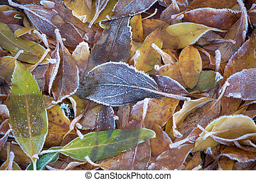 Leaves with ice crystals