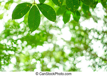 Leaves with natural green bokeh