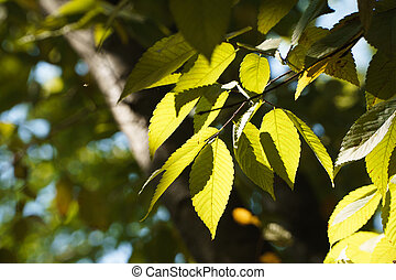 leaves with sunshine