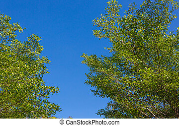 Leaves with the sky
