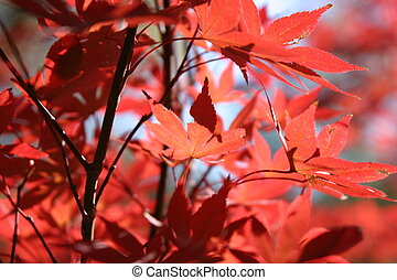leaves2, bukás