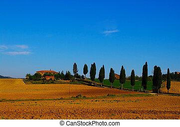 lebanese, landhaus, landcape, bäume, zeder, tuscan, italienesche